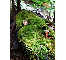 Springbrook National Park - Moss Photographic Print