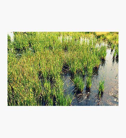 Green Natural Beauty Photographic Print