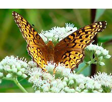Flutterby on Flower Photographic Print