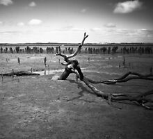 Dying in the Mangrove by Christine  Wilson Photography