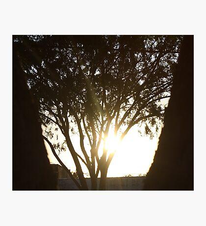 Bright Shadows Photographic Print