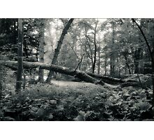One of the Fallen Oak Openings Metro Park Photographic Print