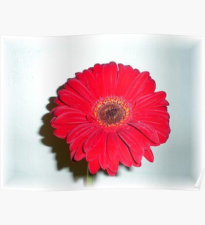 Shadow Flower III Poster