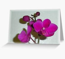 Shadow Flower V Greeting Card