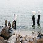 Frigid Cape Cod by Monica M. Scanlan