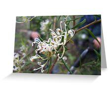 Alpine grevillea, Tasmania's only native grevillea Greeting Card