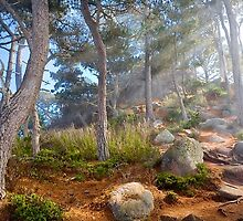 North Shore Trail, Point Lobos, Carmel, California by Maria Draper