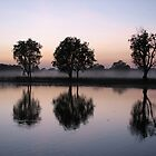 Dawn over Yellow Waters Billabong - NT by Rosdenphoto