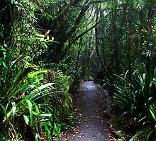 Springbrook Walk by Michael Dearden