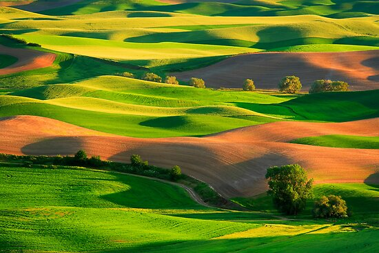 Palouse Patchwork by Inge Johnsson