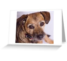 Puppy Dog Eyes Greeting Card