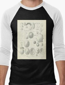 Manual of the New Zealand Mollusca by Henry Sutter 1915 0029 Men's Baseball ¾ T-Shirt