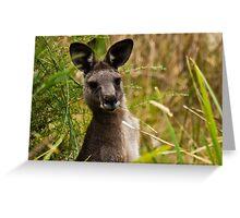 Suprised Kangaroo. Greeting Card
