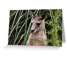 Yeah, I'm a  Roo. Greeting Card
