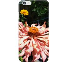 Peach Zinnias grow in Mo's garden  iPhone Case/Skin