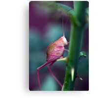 Resting on a Rose Thorn Canvas Print
