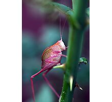 Resting on a Rose Thorn Photographic Print