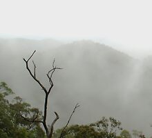 Mount Nebo Lookout on a Rainy Sunday by rjmp