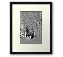Lone Horse Framed Print