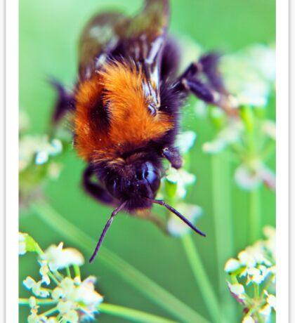 Bee Trouble Sticker