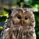 Ural Owl by Larry Trupp