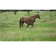 A Mare and her Foal in Rural Kempsey, N.S.W. Australia. Photographic Print