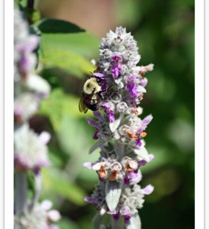 Abuzz about nectar! Sticker