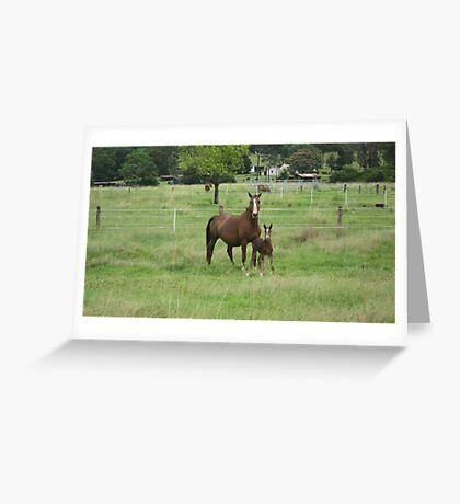 A Mare and Her Foal on a Rural Property. Greeting Card