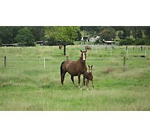 A Mare and Her Foal on a Rural Property. Photographic Print