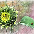 Sunflower and Ladybird. by Valentina Walker