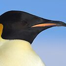 Emperor Penguin Headshot by Steve Bulford