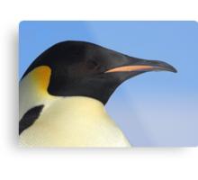 Emperor Penguin Headshot Metal Print