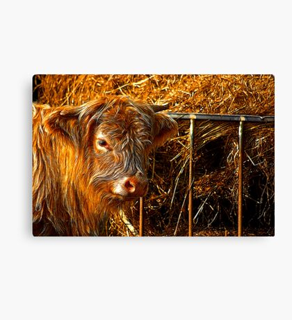 Highland Cow #1 Canvas Print