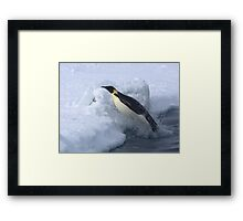Emperor Penguin Launch Framed Print
