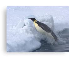 Emperor Penguin Launch Metal Print