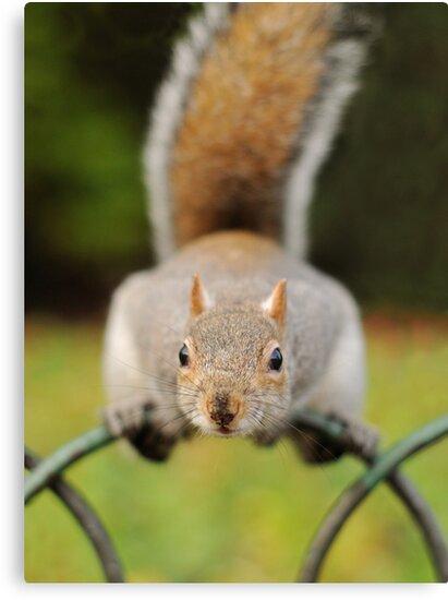 Gimmee Nuts! by Richard Heeks
