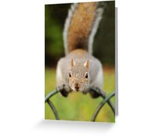 Gimmee Nuts! Greeting Card