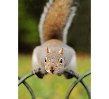 Gimmee Nuts! Photographic Print