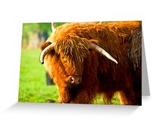 Highland Cattle #3 Greeting Card