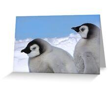 Emperor Chicks Greeting Card