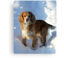 paws in the snow Canvas Print