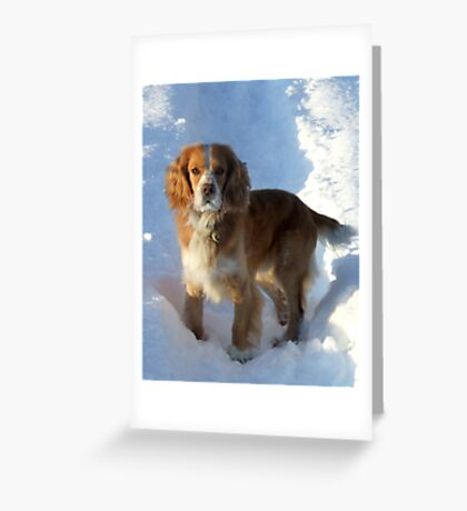 paws in the snow Greeting Card