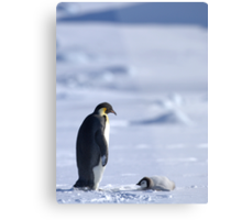 Emperor Penguin and Chick - Snow Hill Island Metal Print