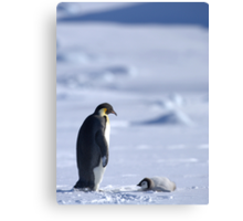Emperor Penguin and Chick - Snow Hill Island Canvas Print