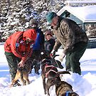 Dogs kick up the snow dust for the Sledding Family by TraceyAckerson