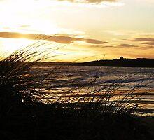 Beach throught the reeds - Elie, Scotland by mela80