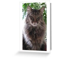 Mr. Kitty decked out in his winter fluff Greeting Card