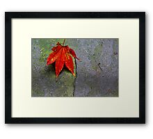 Leaf on Slate Framed Print