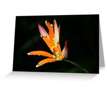 Heliconia during a monsoon (Singapore) Greeting Card