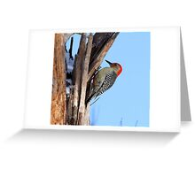 Red Belly Woodpecker Greeting Card